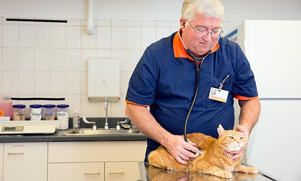 [Dr. Gary Brummet examines a cat]