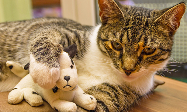 [cat with a toy]