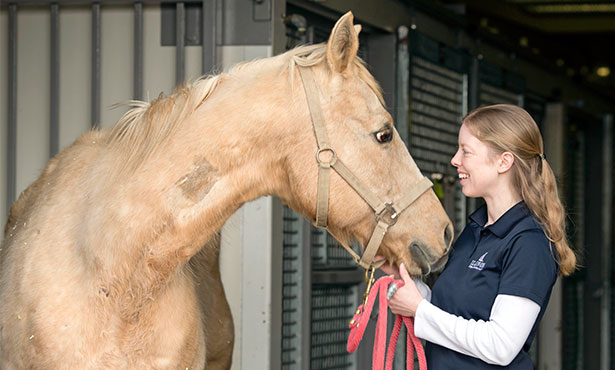 [Dr. Annette McCoy with a palomino]