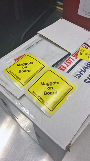 [medical maggots are shipped from suppliers]
