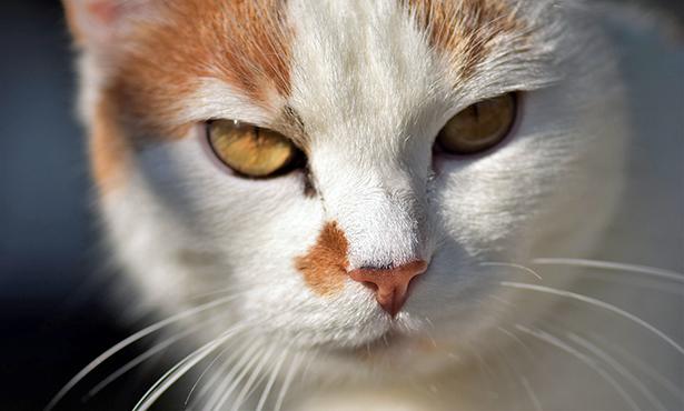 [cat acne column]