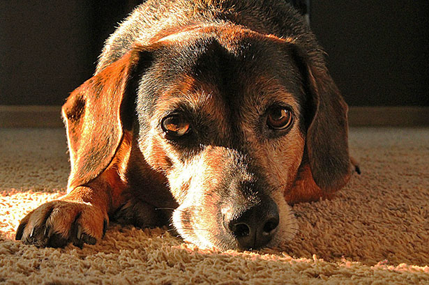 [dog in sunlight]