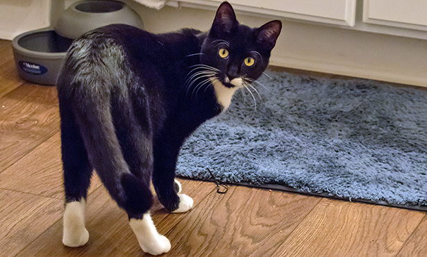 [black cat in a kitchen]