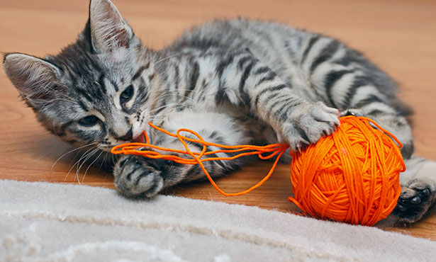 [kitten plays with a ball of yarn]