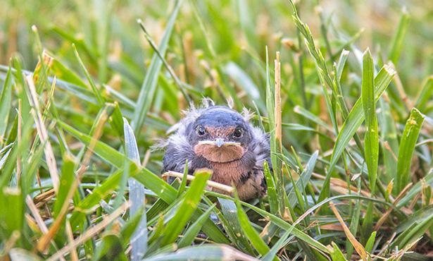 [baby bird in grass]