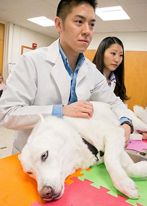 [Dr. Jordan Vitt checks the heart of a white dog]