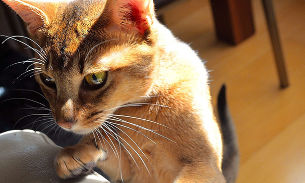 [curious cat]