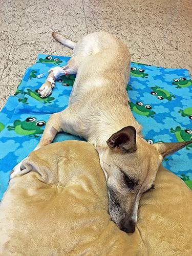 [Loki at the Veterinary Teaching Hospital]