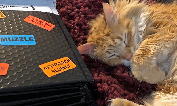 [cat sleeps next to mailer]