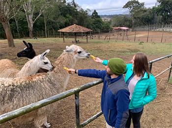 [Maichael and Courtney feed the llamas]