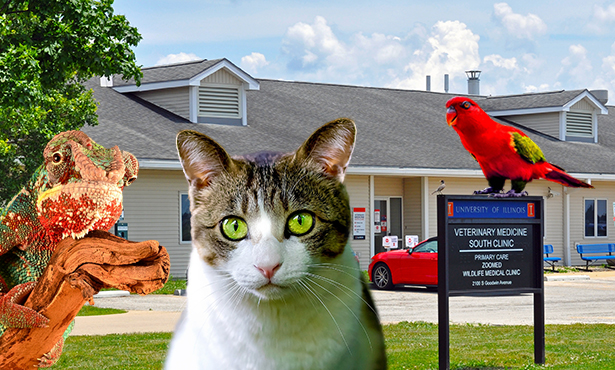 [exterior of clinic with reptile, cat, and parrot]