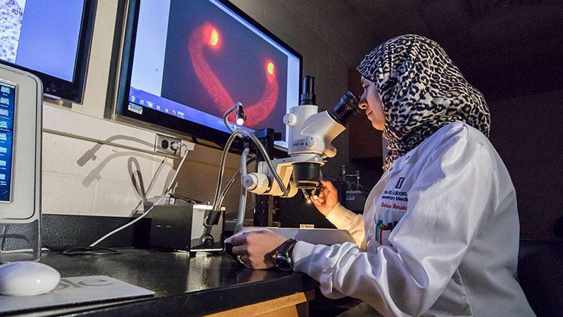 graduate student in Dr. Ko's lab