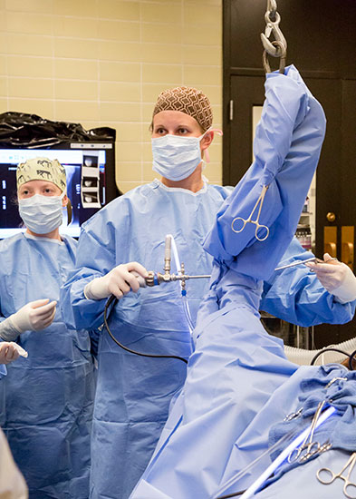 [equine surgery resident performing ortho surgery]