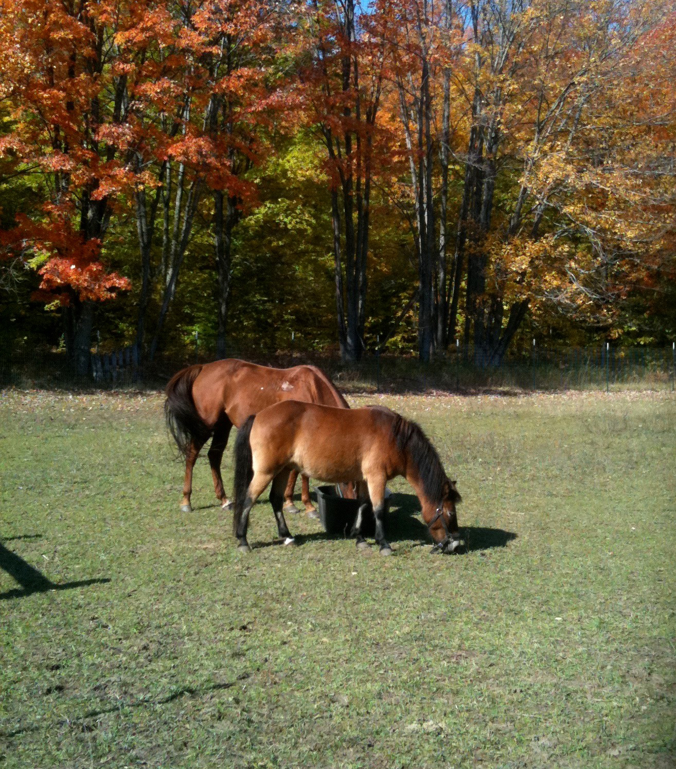 horses-photobyDr.Houpt