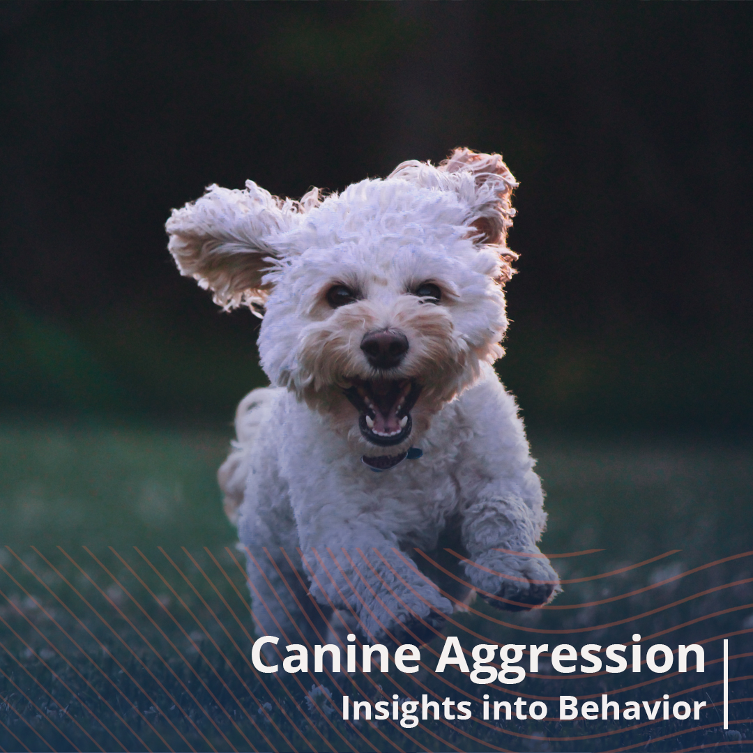 Dog with Aggression