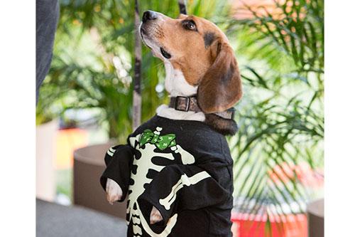 Beagle Bones